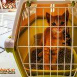 Gatto nel trasportino con lettiera per pipì e cacca