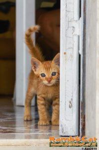 Gatto alla porta