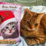 Gatto con biglietto di auguri Natale 2016