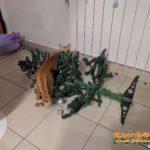 Gatto distrugge albero di Natale