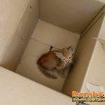 Gatto nella scatola