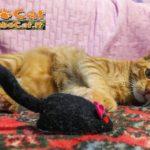 Gatto con topo Natale 2016