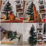 Collage del gatto con l'albero di Natale