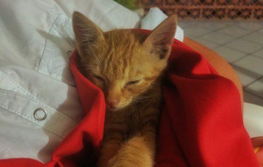 Micio stanco dorme