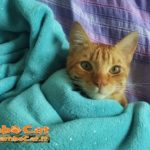 Gatto sotto la coperta verde di ciniglia
