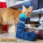 Calzino della Befana 2017 e il gatto