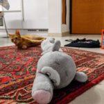 Gatto attacca peluche elefante paraspifferi