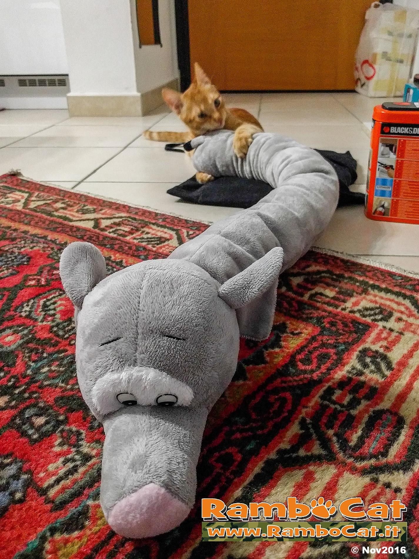 Gatto azzanna peluche elefante paraspifferi