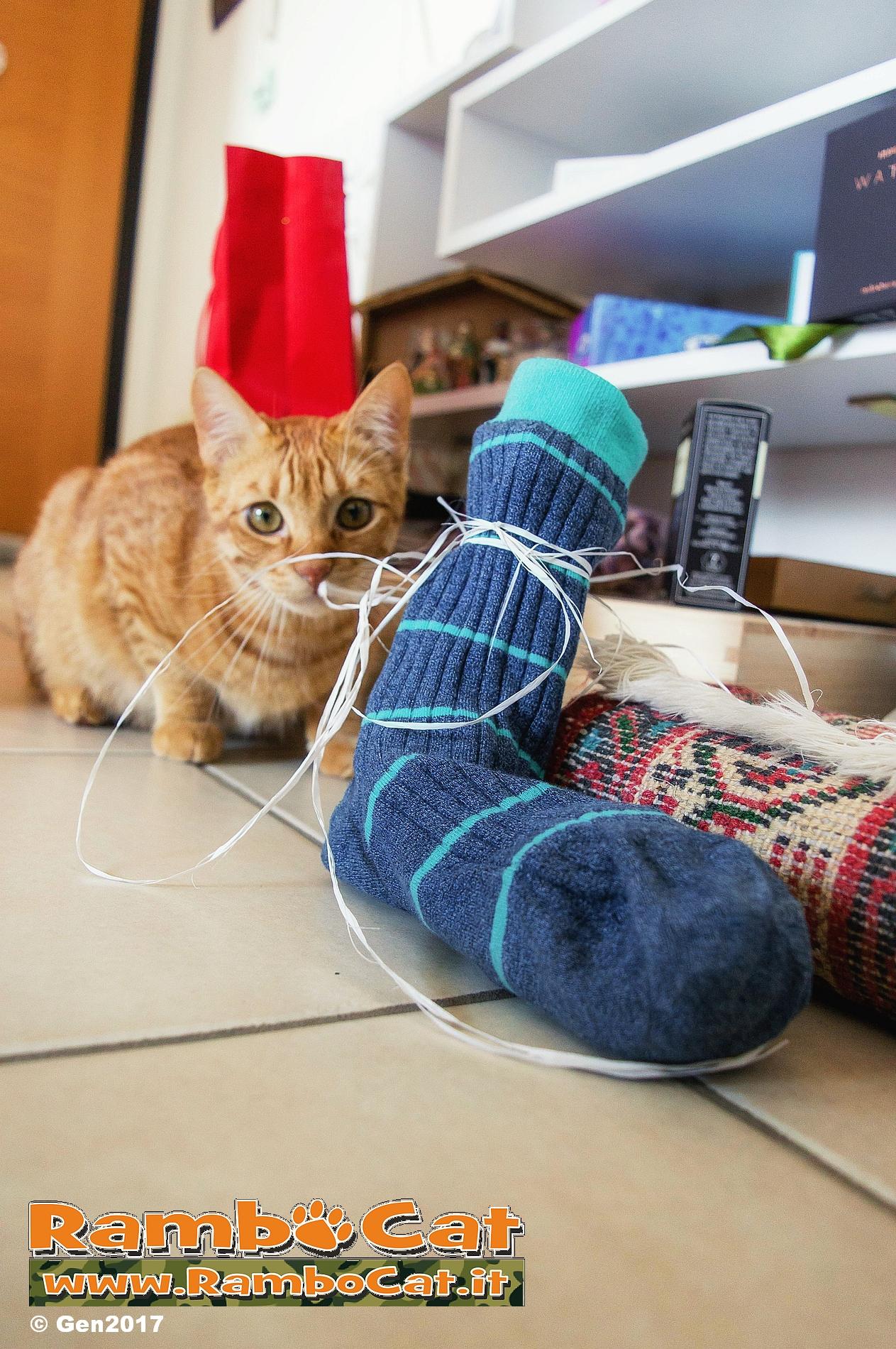 Gatto con calza della Befana Epifania 2017
