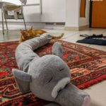 Gatto morde peluche elefante paraspifferi
