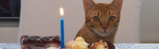 Primo compleanno del gatto Rambo